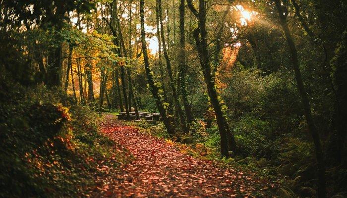 Bosque Encantado Molinos