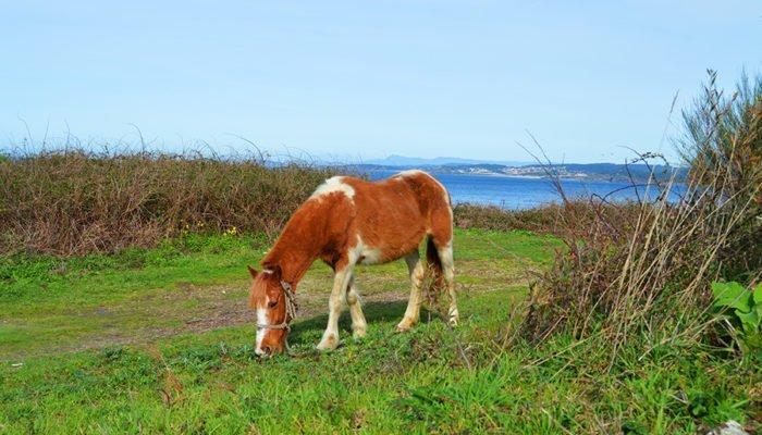 Cape Udra Horses