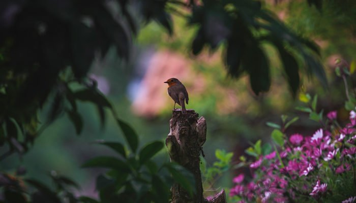 bird in nature