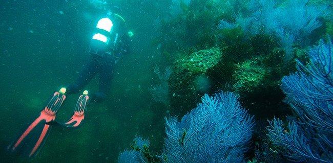 Buceo en Islas Cíes