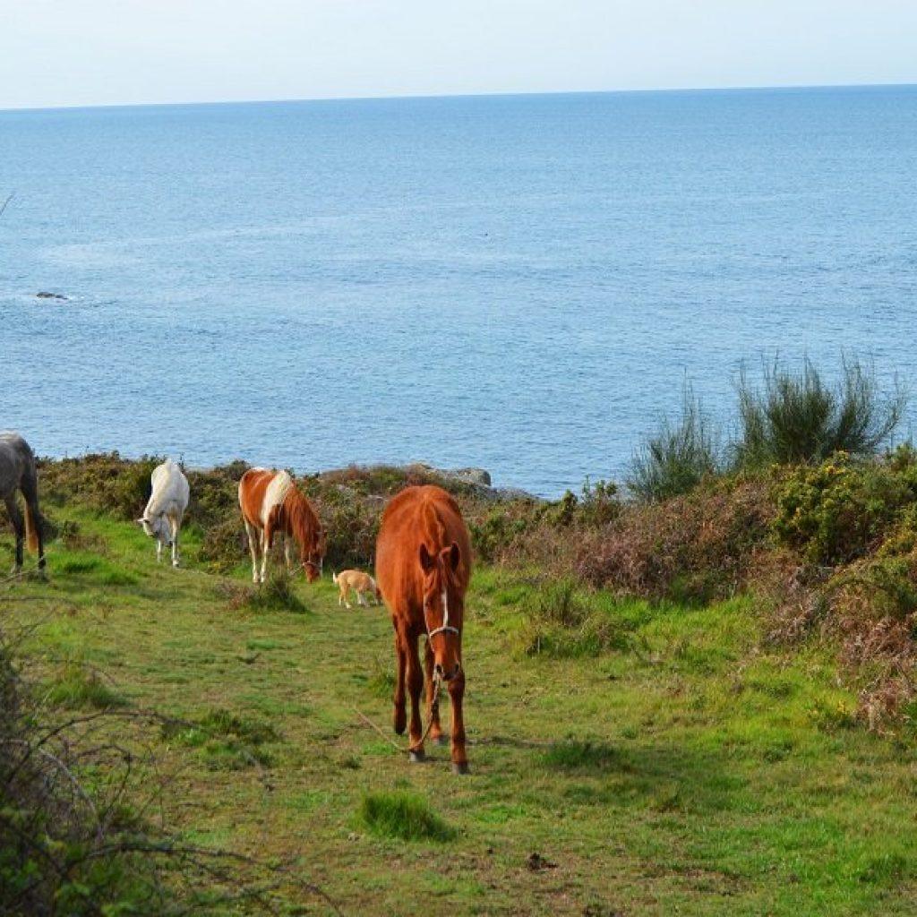 caballos udra