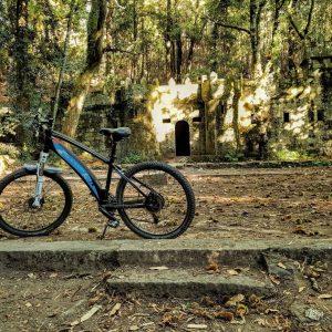 Bici Bosque Encantado