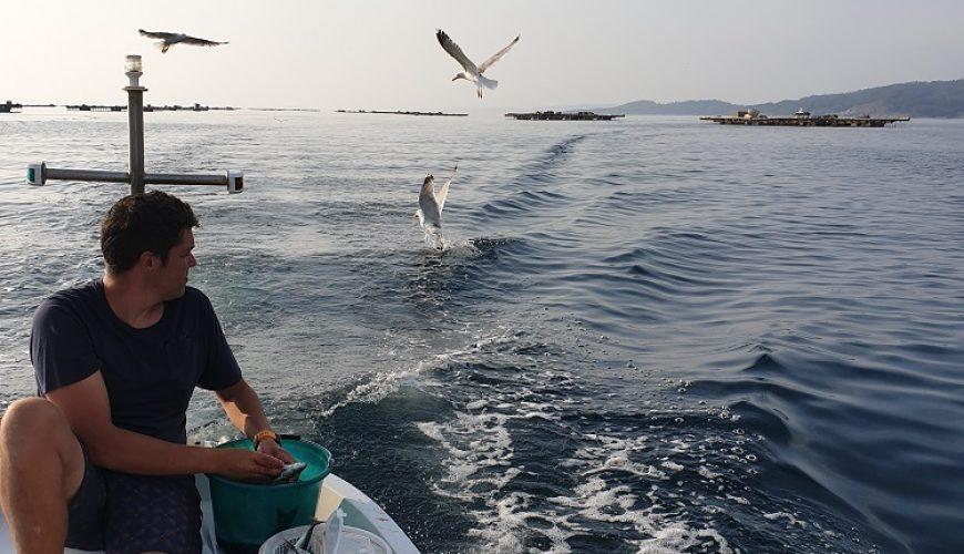 Pesca en la Ría de Aldán