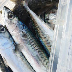 pescar rinchas en ria de aldan