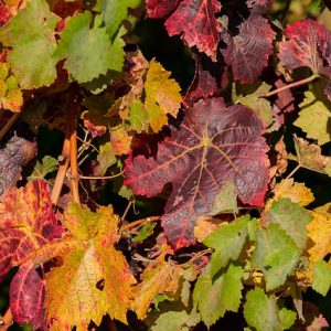 autumn-3761748_640