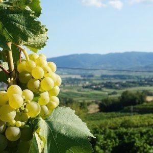 grapes-3987477_640
