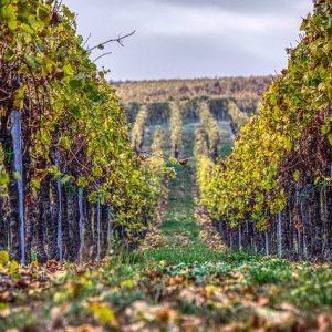 vineyards-3901284_640